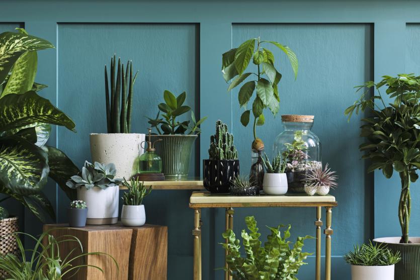Rośliny urban jungle
