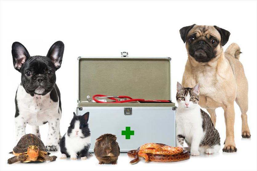 Przeprowadzamy szczepienia ochronne psów, kotów, królików, fretek i gołębi, Lecznica Weterynaryjna Mirosław Rak, Toruń