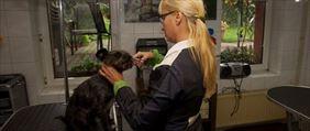 psi fryzjer, Lecznica Weterynaryjna Mirosław Rak, Toruń