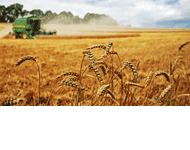 Agro-Complex Przedsiębiorstwo doradcze