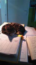 kot w gabinecie weterynaryjnym Futrzak, Futrzak Gabinet Weterynaryjny Katarzyna Dołębska, Parchowo