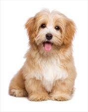 pies, Przychodnia Weterynaryjna s.c., Zawiercie