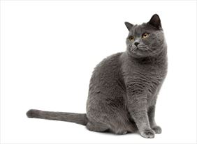 kot, Przychodnia Weterynaryjna s.c., Zawiercie