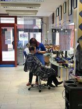 fryzjerka podczas pracy, Salon Venus Paweł Wiśniewski, Zabrze