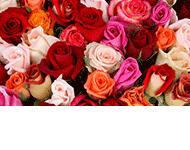 Glamelia Kwiaciarnia Izabela Masłoń