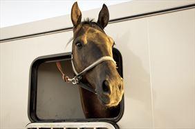 przewóz konia, Metbox s.c., Orzesze