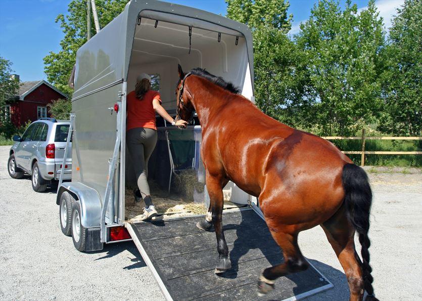 Sprzedaż przyczep dla koni, Metbox s.c., Orzesze