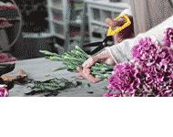 Salon Kwiatów i Upominków Agnieszka Kutyła