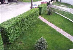 rośliny na żywopłot, Victorinex Anna Iskra-Omernik, Bielsko-Biała