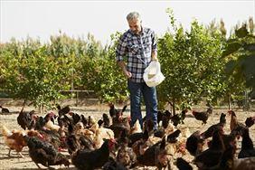 pasza dla kurczaków, Alta Firma handlowo usługowa Anna Ryłko-Potęga, Tarnawa
