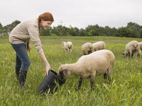 pasza dla owiec, Alta Firma handlowo usługowa Anna Ryłko-Potęga, Tarnawa