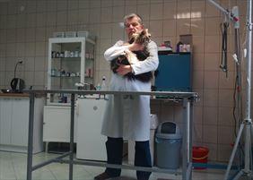 sterylizacja zwierząt, Pilichowski Amadeusz Przychodnia weterynaryjna, Łódź