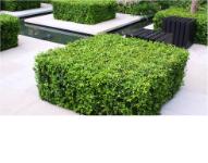Twój Ogród Projektowanie i zakładanie ogrodów K. i N. Wanat