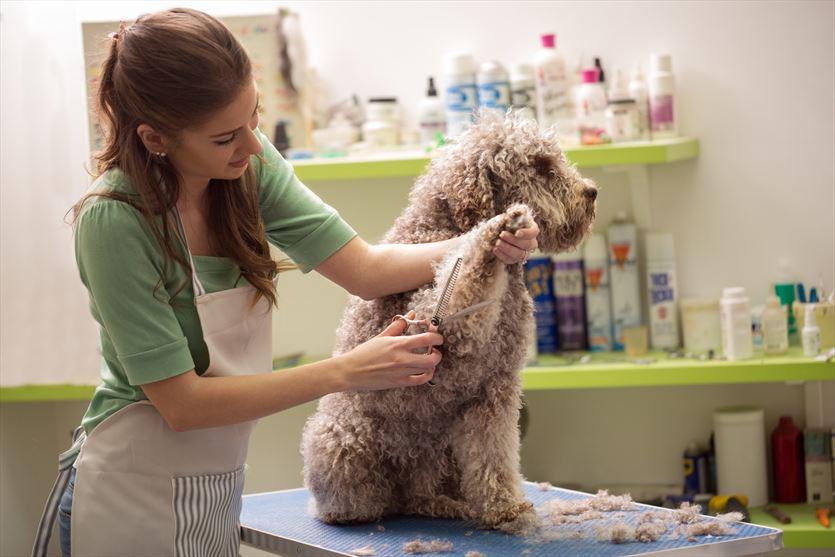 Zabiegi pielęgnacyjne dla psów, Psi Fryzjer Katarzyna Sienkowicz, Sieradz