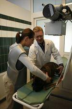 szczepienia zwierząt domowych, AS Lecznica Weterynaryjna, Olsztyn