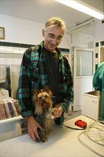 domowe zwierzęta leczenie, AS Lecznica Weterynaryjna, Olsztyn