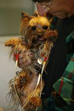psi pacjent, AS Lecznica Weterynaryjna, Olsztyn