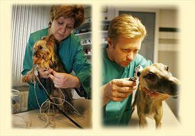 leczenie zwierząt, AS Lecznica Weterynaryjna, Olsztyn