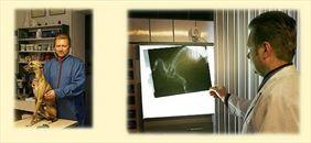 leczenie małych zwierząt, AS Lecznica Weterynaryjna, Olsztyn