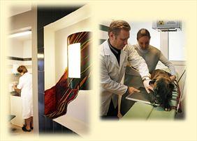 leczenie psów, AS Lecznica Weterynaryjna, Olsztyn