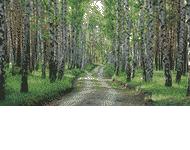 Nadleśnictwo Gniezno Lasy państwowe