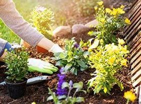 sadzenie kwiatów w ogrodzie, Damian-garden Nolberczak Damian, Więckowice
