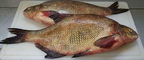 sprzedaż ryb, Tęczowy Pstrąg Hurt Detal Ryby Owoce Morza Dziczyzna, Poznań