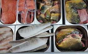 ryby świeże, Tęczowy Pstrąg Hurt Detal Ryby Owoce Morza Dziczyzna, Poznań