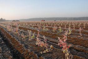 Kwiaty na polu, Henryk Hinca mgr inż. Gospodarstwo szkółkarskie, Piła