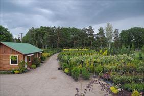 Ogrodnictwo, Henryk Hinca mgr inż. Gospodarstwo szkółkarskie, Piła
