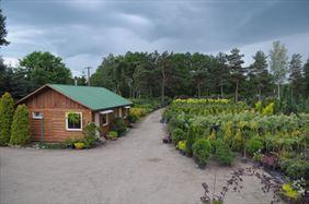 Szkółka drewniana, Henryk Hinca mgr inż. Gospodarstwo szkółkarskie, Piła