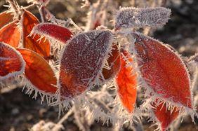 Kolorowe liście, Henryk Hinca mgr inż. Gospodarstwo szkółkarskie, Piła