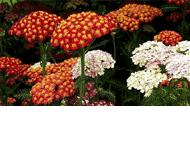 Centrum Ogrodnicze Ogród Marzeń