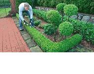 Ogród Marzeń Centrum ogrodnicze