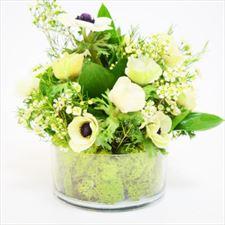 kwiaty, Poppy Flowers, Biała Podlaska