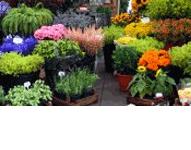 Bajeczne Ogrody i Agroturystyka Maria Bożek