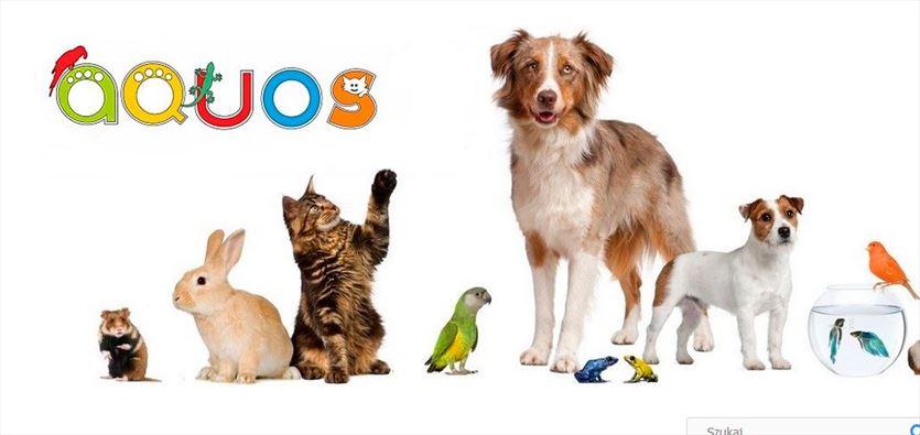 Zajmujemy się internetową sprzedażą akcesoriów i pożywienia dla zwierząt, Aquos Katarzyna Rusiniak, Warszawa