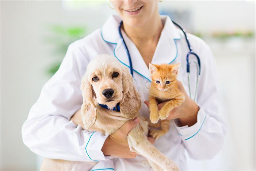 Profilaktyka i leczenie zwierząt domowych, Całodobowa Lecznica Weterynaryjna Vet Med, Brwinów