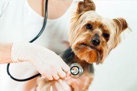 leczenie psa, Całodobowa Lecznica Weterynaryjna Vet Med, Brwinów