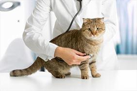 leczenie kota, Całodobowa Lecznica Weterynaryjna Vet Med, Brwinów