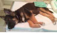 Alma Wet Całodobowa lecznica dla zwierząt