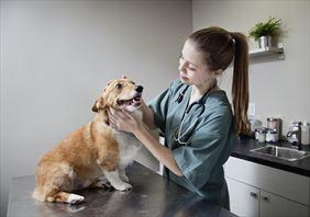 leczenie psów, Przyjaciele Gabinet weterynaryjny lek. wet. Aneta Wiktorowicz, Radzymin