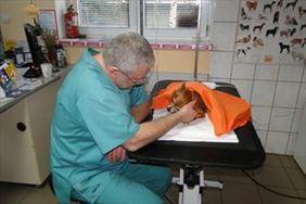 pies w samochodzie, Gabinet weterynaryjny Sławomir Rogala-Zawadzki, Ożarów Mazowiecki