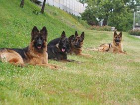 trening dla psów, Baritus Kamil Kędziorek, Warszawa