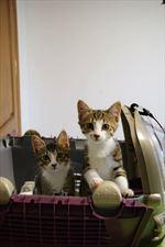 koty, Joga Vet Przychodnia Weterynaryjna Dorota Wasylewska-Jakima, Warszawa
