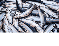 Smażalnia ryb Herbergerówka