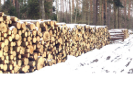 Gollenia Piotr Zakład Usług Leśnych