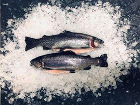 ryby mrożone, Rybox Ryby i owoce morza Mateusz Kłoczkowski, Staniszów