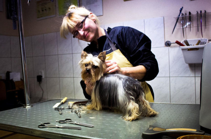 Profesjonalne strzyżenie psów, czyli czym zajmuje się groomer?