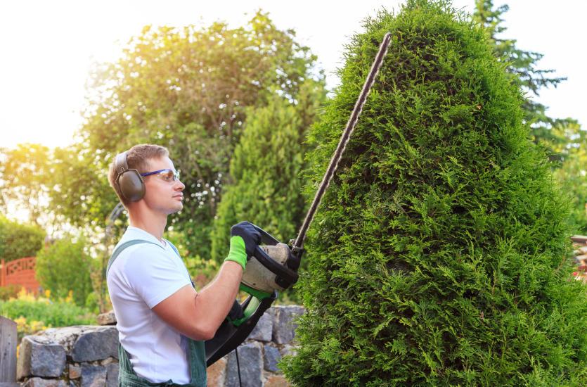 Profesjonalna firma ogrodnicza – do zadań specjalnych